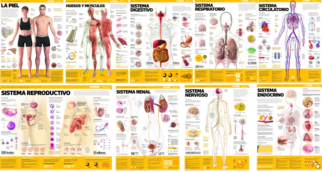 The collection of posters of the Human Body.
